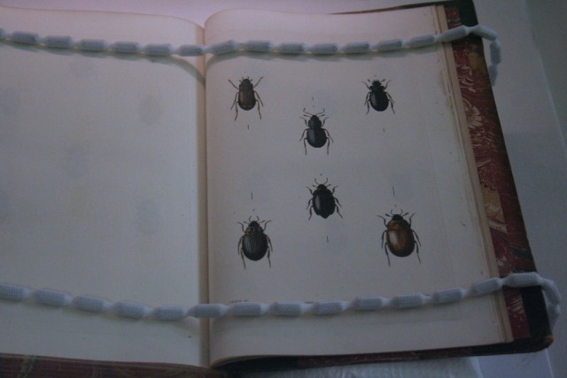 Stephens Illustrations of British Entomology