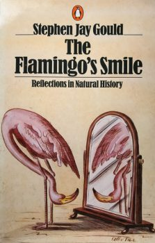 The Flamingo's Smile