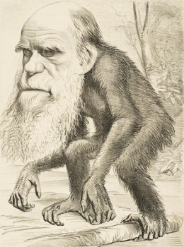 Darwin ape cartoon