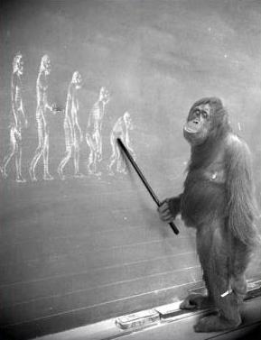 An orangutan theorising